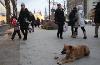 Massacre de cachorros de rua na Rússia antes da Copa gera questionamento